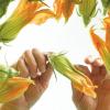 Spirito Contadino: ortaggi bio per prevenire le malattie