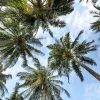 La palma da dattero nel Patrimonio Unesco