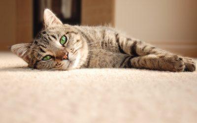 Animali&Co: veterinario e vaccini