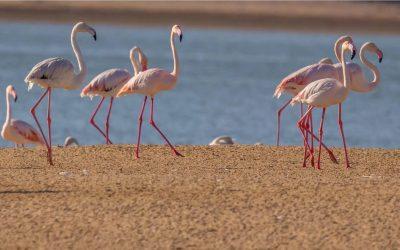 Giornata Mondiale della Natura: Il patrimonio naturalistico degli Emirati