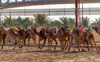 L'antica tradizione della corsa dei cammelli
