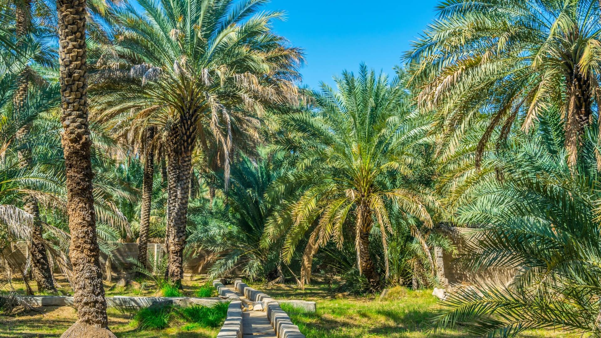 Al Ain Palms