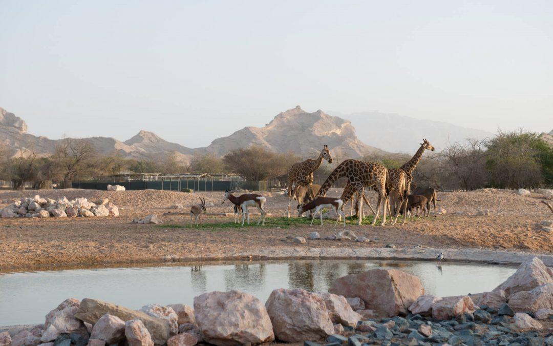 Al Ain: Alla scoperta della natura e dell'entroterra emiratino
