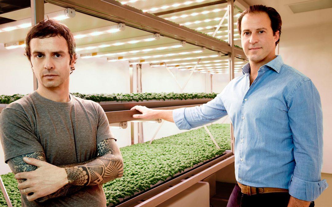 Planet Farms, le insalatine da vertical farm alla conquista degli italiani